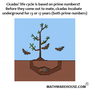 prime factors of cicadas life cycle